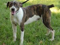 Mountain Cur - Quimby - Medium - Adult - Male - Dog