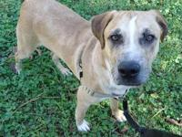 Mountain Cur - Whisky Runner - Medium - Young - Male -
