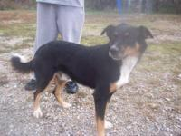 Mountain Dog - Jethro - Large - Young - Male - Dog