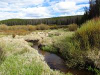 The Pelton Creek Acreage is located in the Medicine Bow