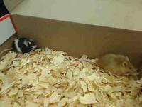 Mouse - A844605 - Small - Adult - Female - Small &