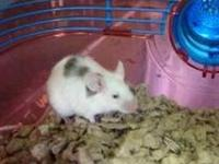 Mouse - Chewy - Small - Adult - Male - Small & Furry