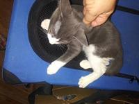 Mousey's story Mousey is a sweet playful boy looking