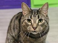 Mowgli's story Playful and affectionate, Mowgli is a