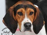 Moxi (Treeing Walker Coonhound)'s story Moxi is a 2