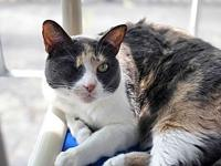 Moxie's story Our beautiful one eyed pirate girl Moxie
