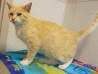 Mr. Bailey's story What a nice cat! Mr. Bailey is a