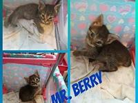 Mr. Berry's story Amber and her kittens were found