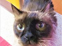 MR. Bob's story *SPECIAL* ALL CATS OVER 1 YEAR ARE $50
