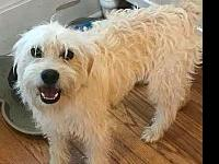 Mr. Fluffer's story Mr Fluffer is a terrier mix weighs