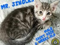 Mr. Jingles's story You can fill out an adoption
