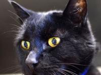 Mr. Kitty's story I am a super dude with the softest,