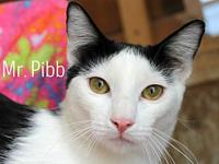 Mr. Pibb's story The adoption fee is $85.00 with an