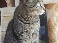 Mr Tabby's story You can fill out an adoption