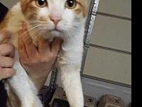 Mr Watson's story This handsome man is at the Petco in