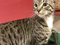 My story Mr. Kitty is a handsome grey tabby male, 1
