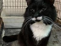 Mr. Tux's story You can fill out an adoption