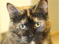 My story Meet Mrs. Potts! She is a lovely tortoiseshell