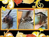 Ms Kitty's story She is 1 year old and is fully