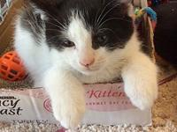 Muenster's story Muenster is a playful kitten is up to