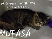 Mufasa's story Fayette County Animal Control Center