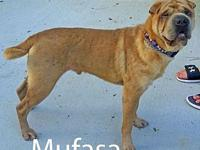 Mufasa's story ADOPTION APPLICTAION: