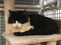 Muffin's story Hi there! My name is Muffin. I am a