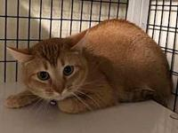 MUFFIN's story PAW Animal Shelter is a high intake No