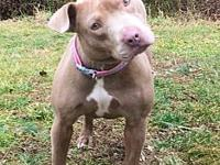 Muffin's story Muffin #2274 is a 1-year-old female, Pit