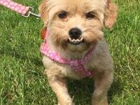 Muffin is a sweet, adorable, 4 yr. Shih tzu mix:)  She