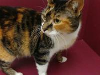 Muffy is 2-3 years old. She is very friendly. Calico,