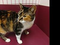 Muffy's story Muffy was brought in as a stray on