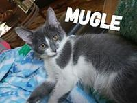 Mugle's story Mugle is such a funny little guy who