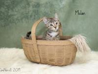 My story Hi there, I'm Mulan and I am 12 weeks old. I