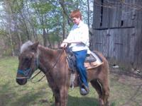 hi i have a mule for sale anyone can ride him he will