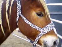 TIRED OF HALTERS THAT BREAK AND YOUR HORSES GETTING