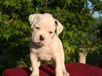 This is snowball, He is a multi signed up Boxer New