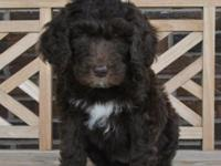Charleston Labradoodles is delighted to announce that
