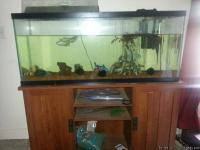 In the picture is the 55 gallon aquarium with one large