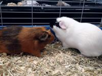ADOPT US!  We are a BONDED PAIR!  Mumu (male) is white