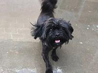 Muppet's story Muppet wants to be the newest member of