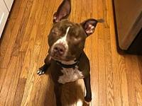 Murdock's story  This adorable smiling pittie is