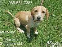 Murphey's story Dog adoption is 100.00 and includes