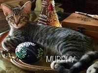 Murphy's story C1806038 - Sir Murphy enjoys laid back