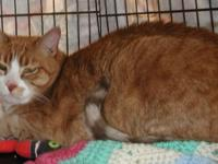 Murphy (special needs) is a 10 year old male kitty who