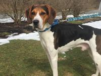 Murphy is one of a kind. If you are a Foxhound lover,