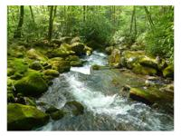 Beautiful creek front lot with over 130 feet on Owl