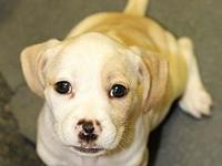 Murray's story Murray is part of a 5 Puppy litter and