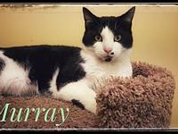 My story Murray is a silly boy. He loves cuddles and