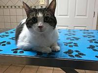 Musi's story Very laid back, spayed, healthy. Apply at